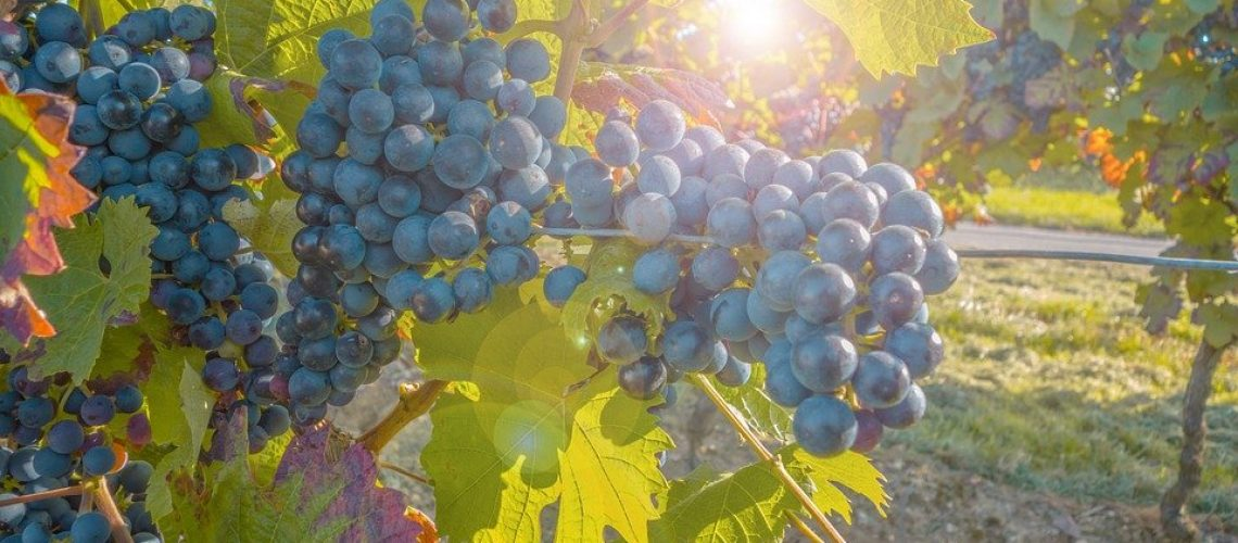grapes-580346_960_720